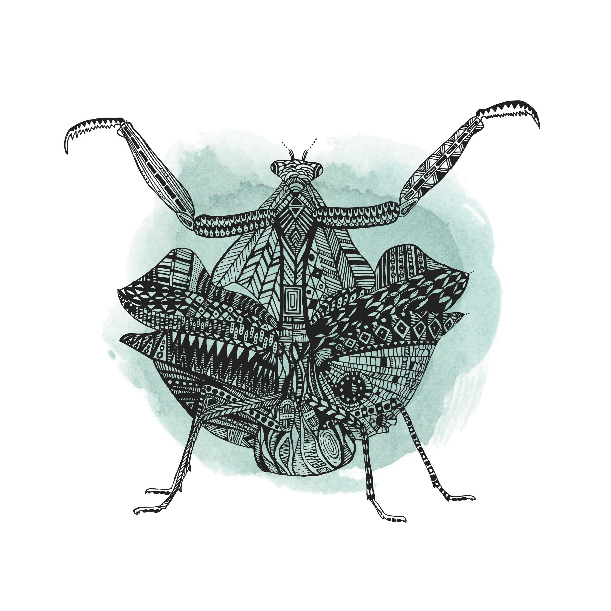 Praying Mantis 1-1.jpg