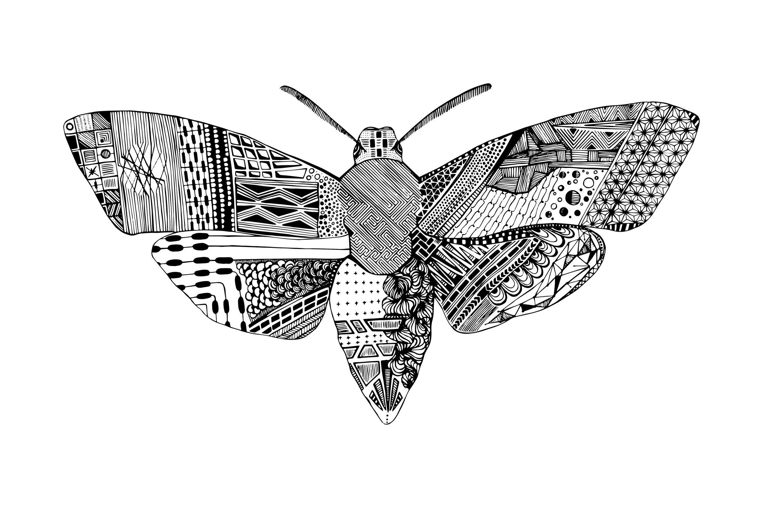 Death Head Moth 3-2.jpg