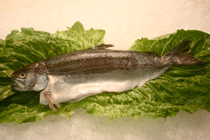 rainbow_trout_whole.jpg