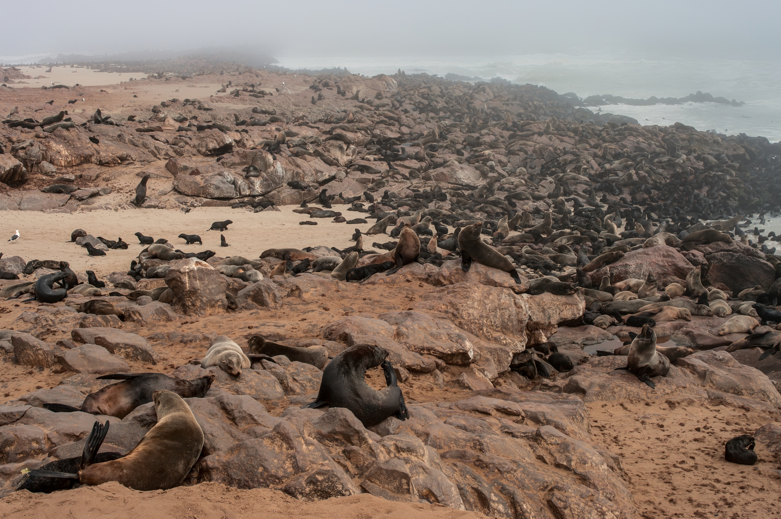 CAPE CROSS, NAMIBIA