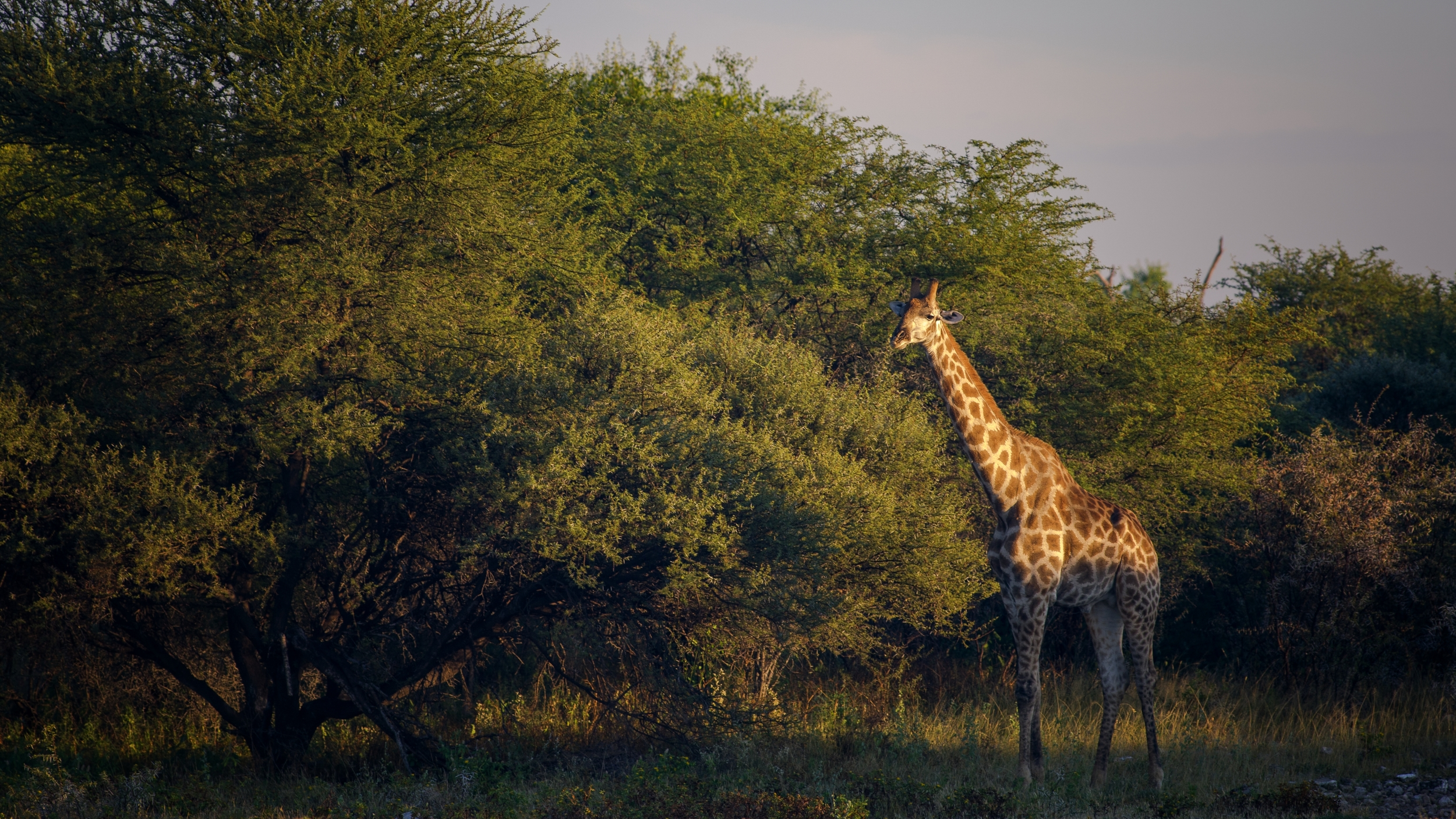 ETOSHA, NAMIBIA