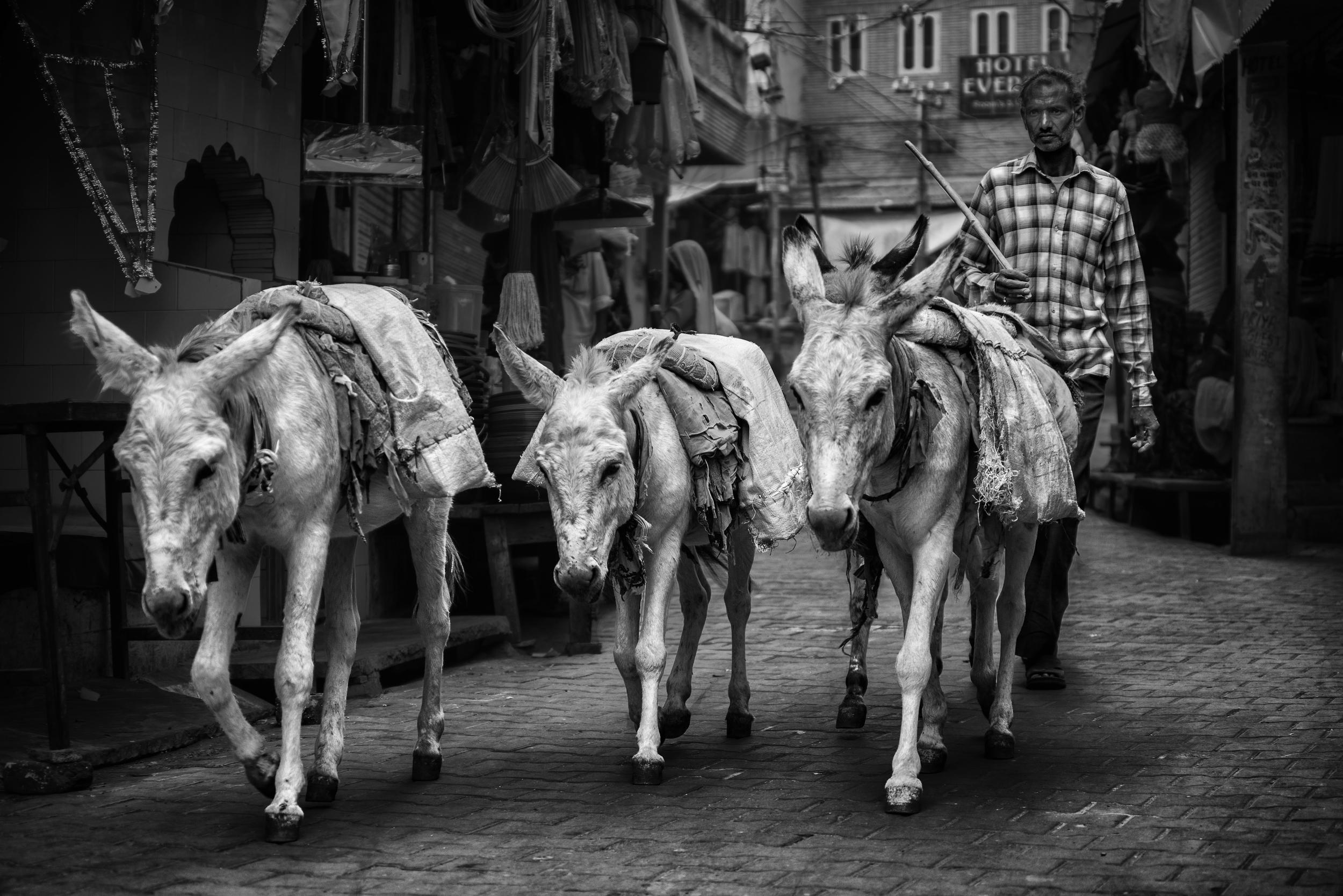 shepherd in the streets of pushkar