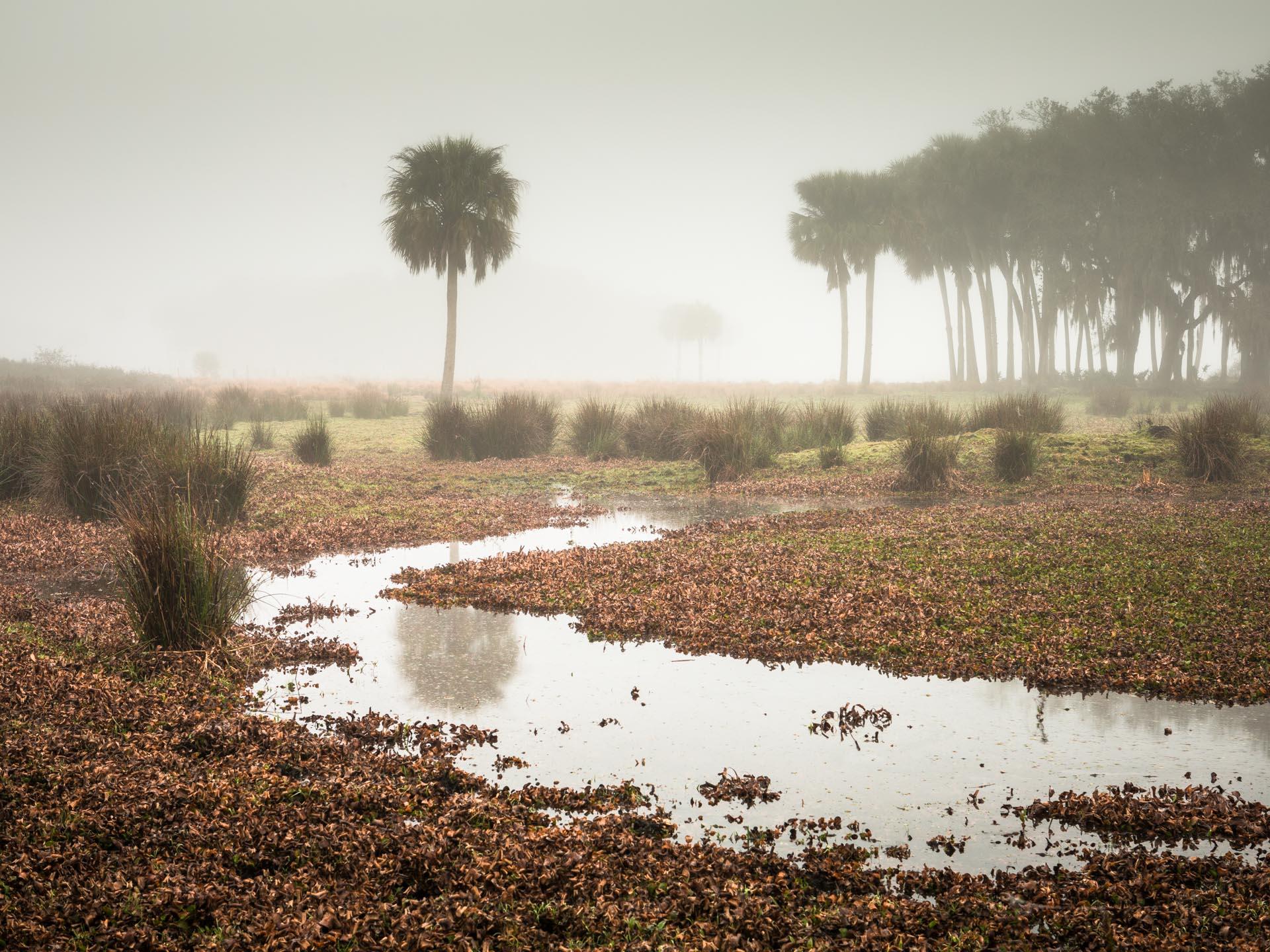FLORIDA INTERIOR -