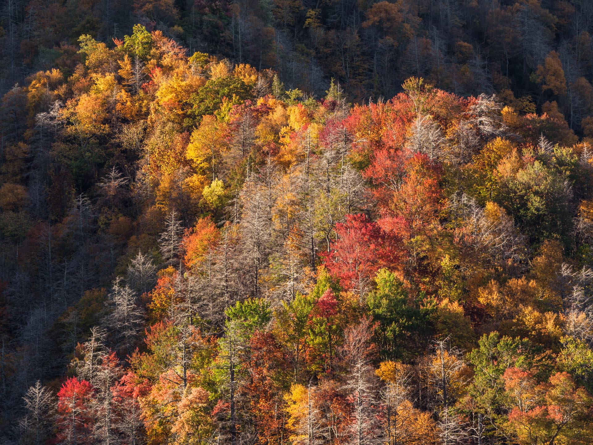 GREAT SMOKY MOUNTAINS -