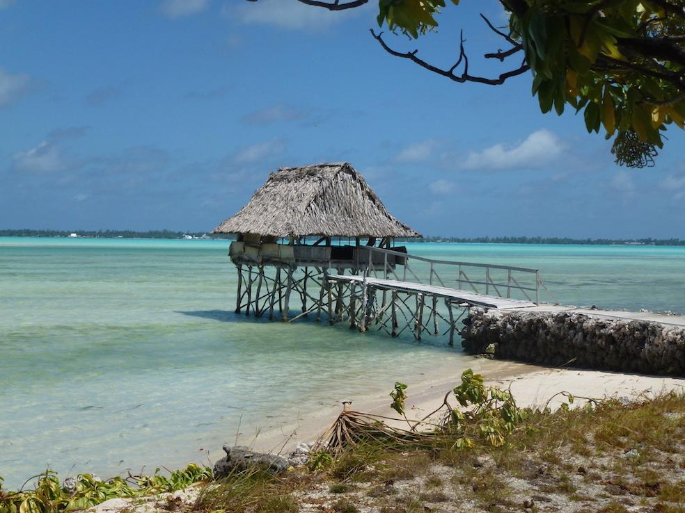 Kamaji Tree Kiribati beach