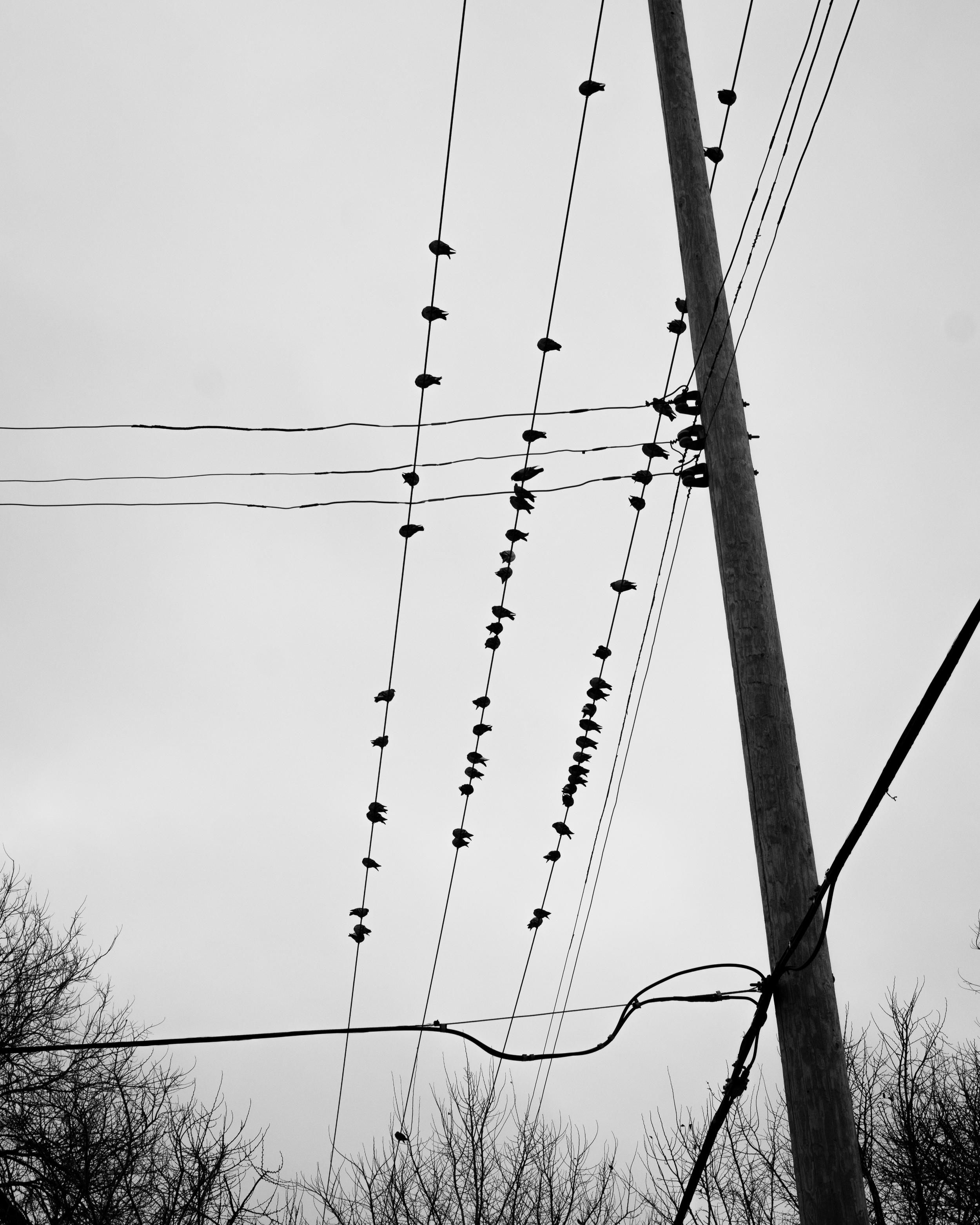 BirdsandWires-1.jpg