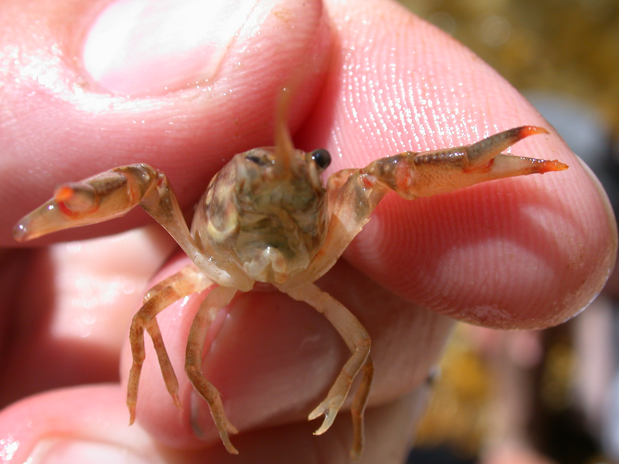 ringed crayfish site 40.JPG