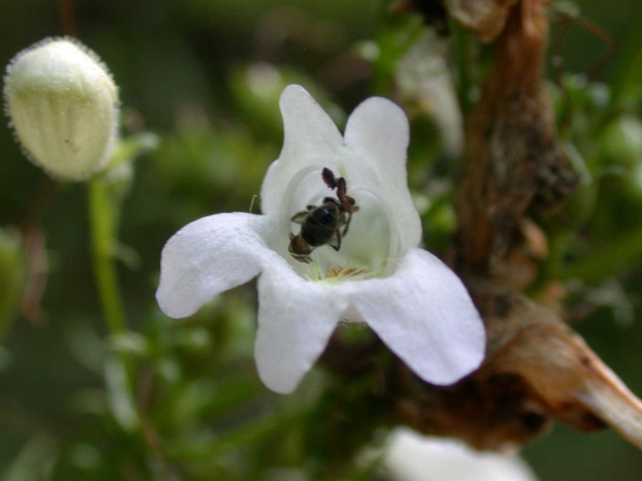 tiny bloom of a wildflower site 51.JPG