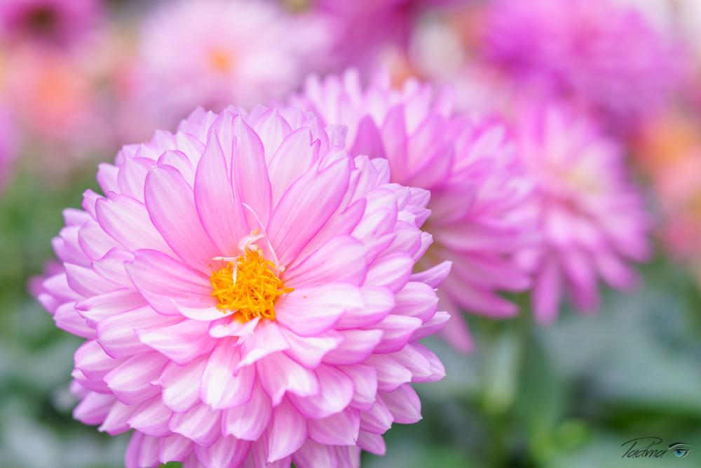 17-05-07-flowers-065-Web.jpg