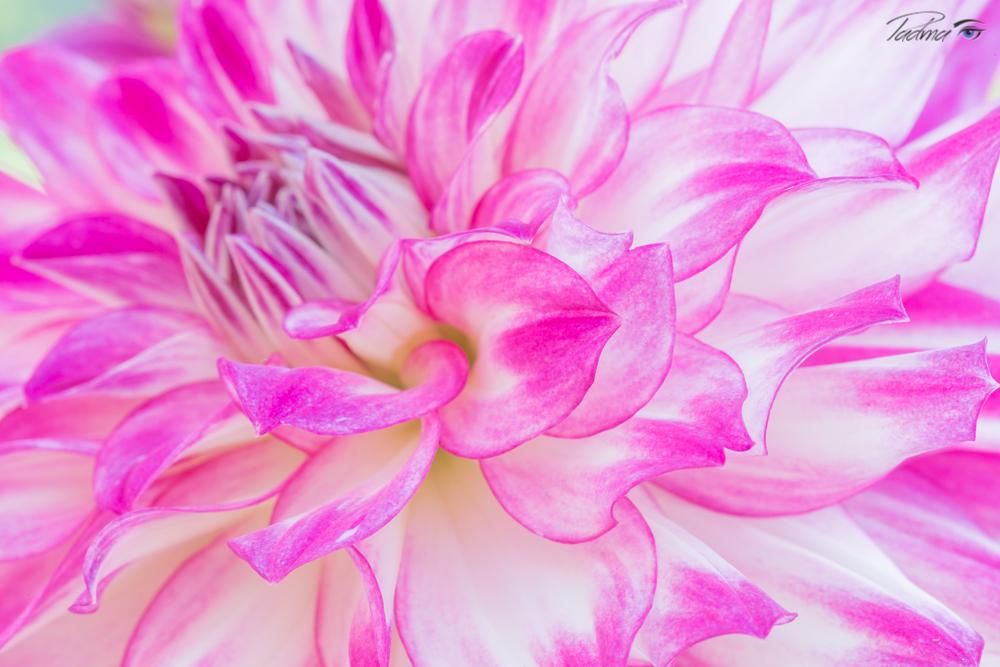 17-04-14-Flowers-104-Web.jpg