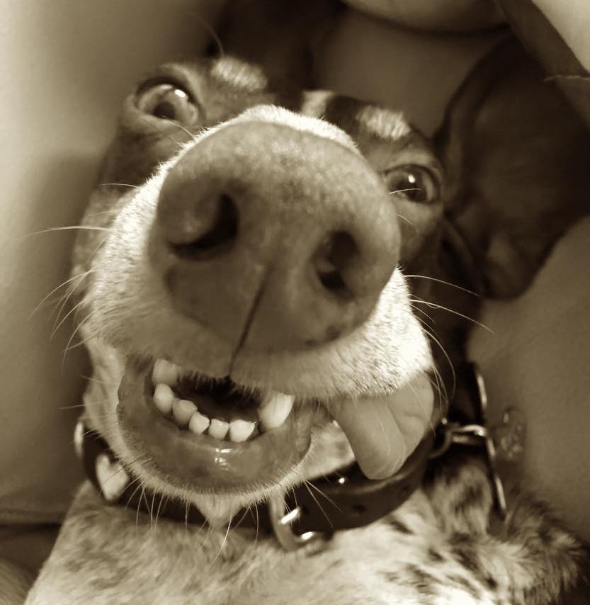 Milo nose and tongue 6.jpg