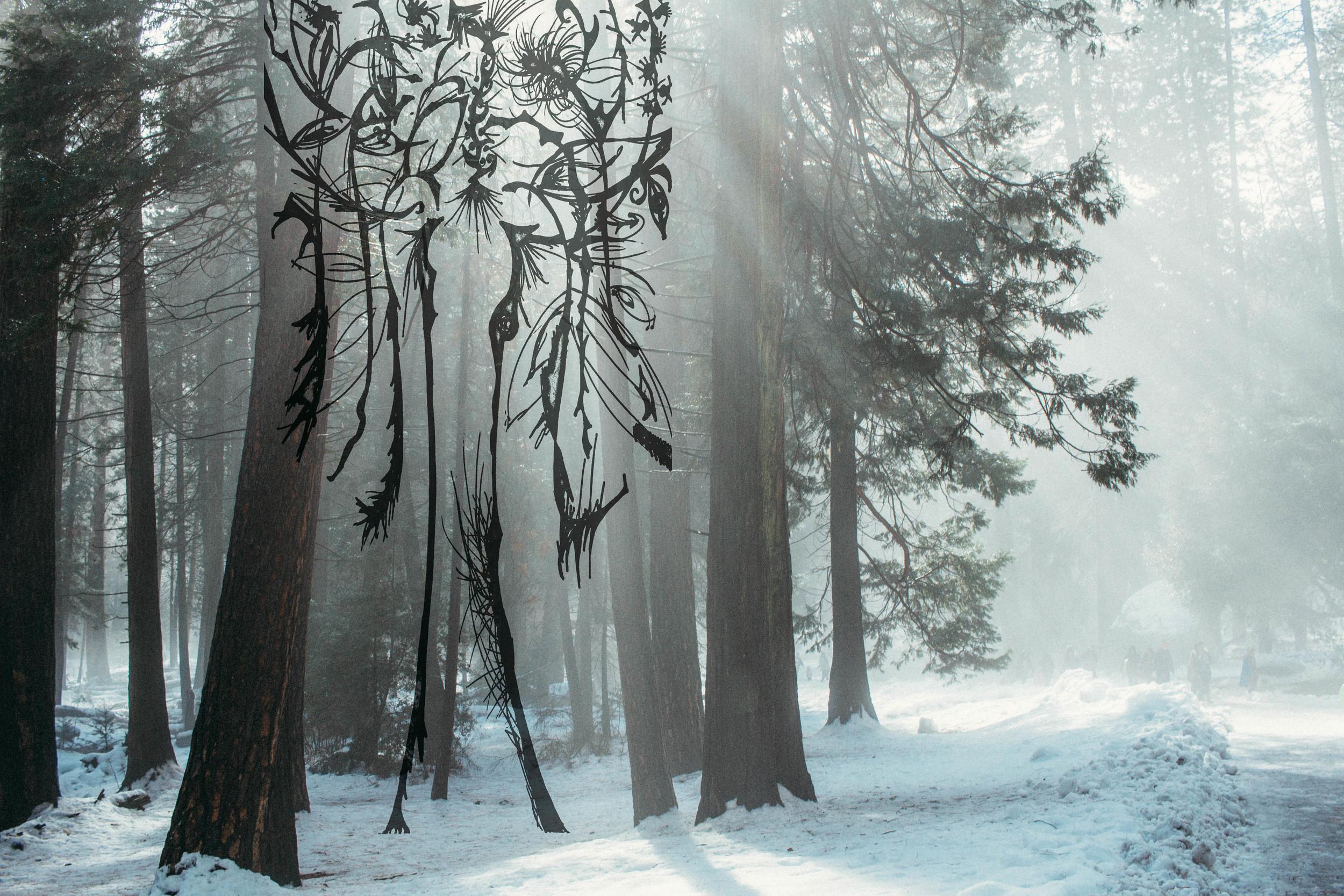 Tree_Yosemite4.jpg