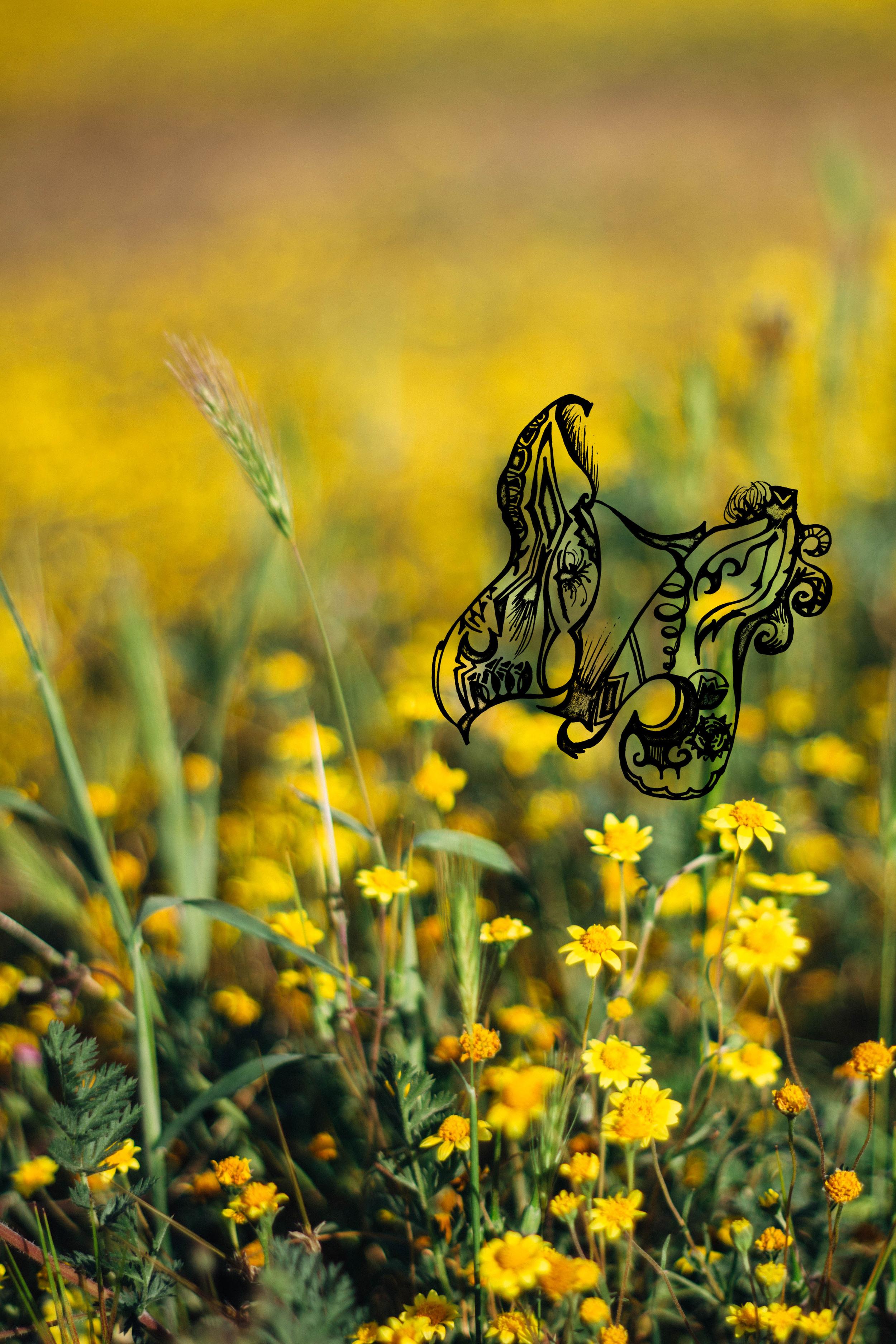 Butterfly_Flowers.jpg