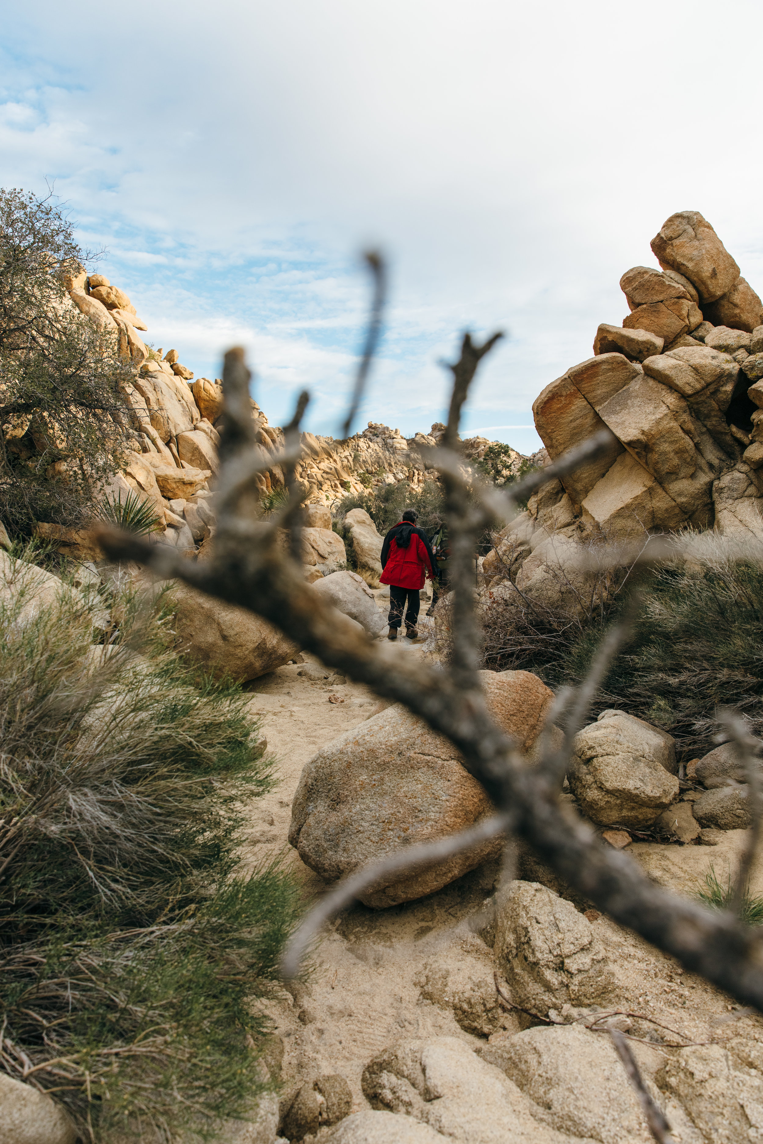 4 mile hike through the Wonderland of Rocks to Willow Hole, a desert oasis