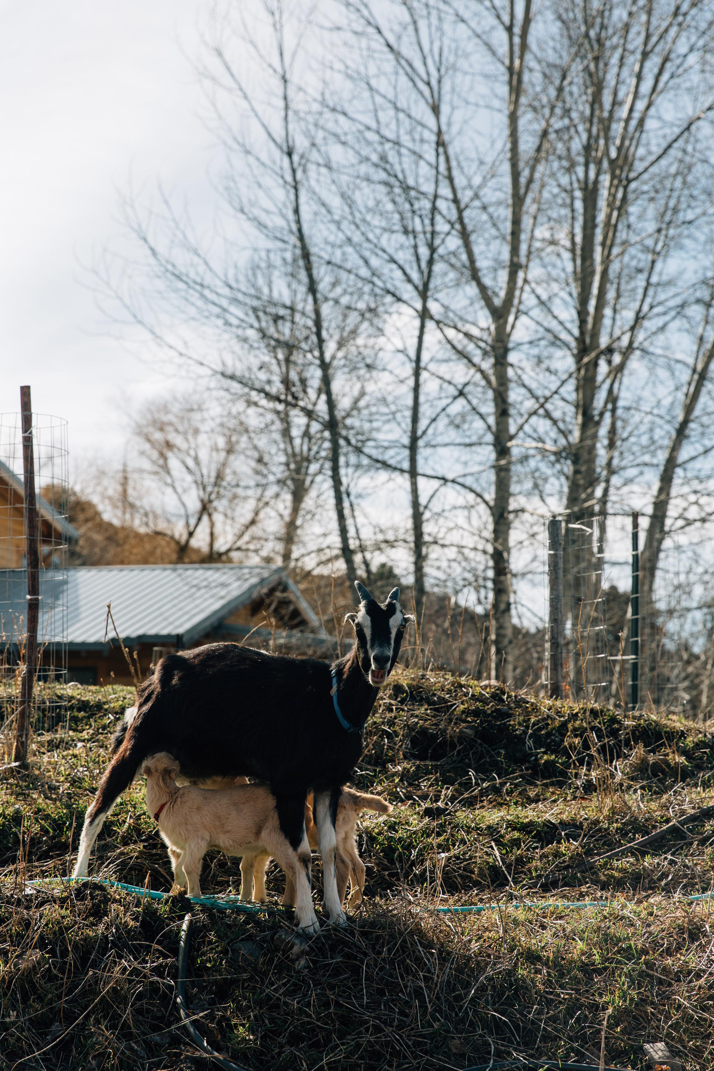 Montana_03_24_17-37-BLOG.jpg