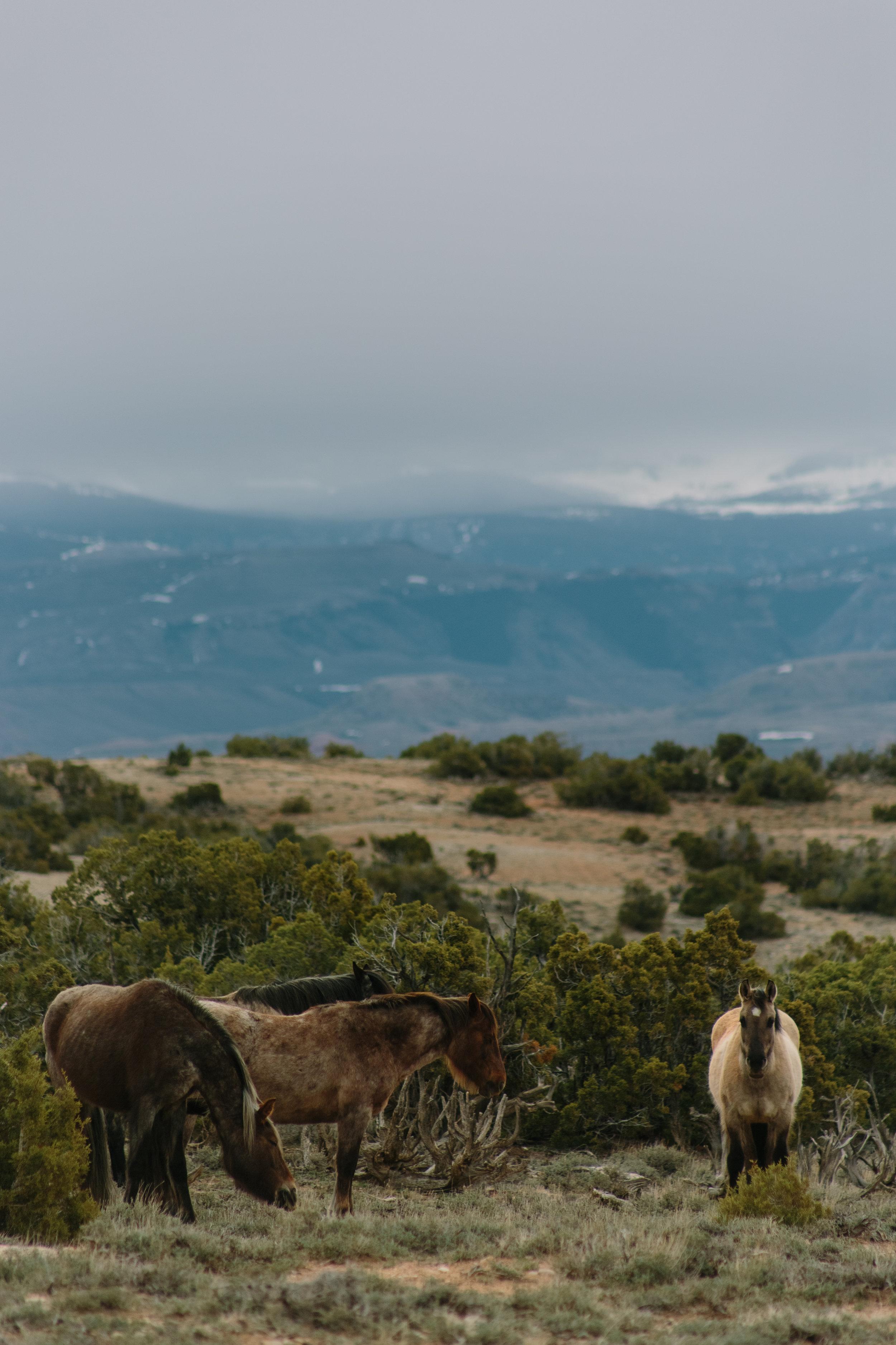 Montana_Wyoming_horses-4-BLOG-FB-INST.jpg