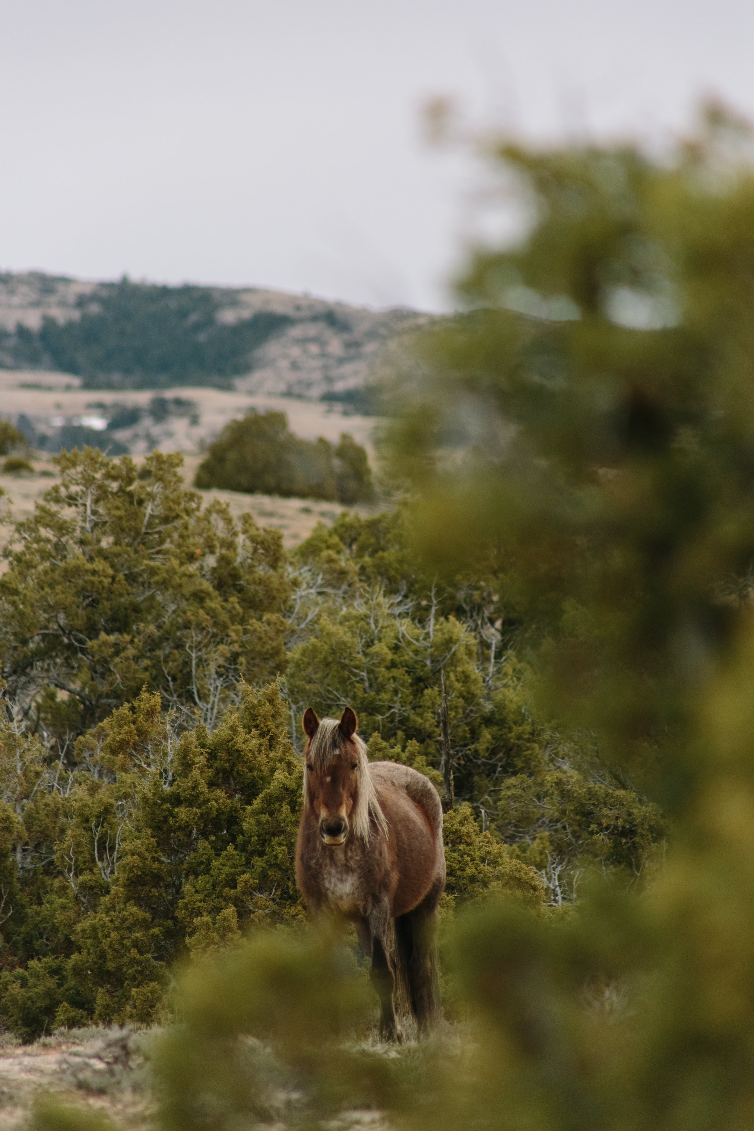 Montana_Wyoming_horses-9-BLOG-FB-INST.jpg
