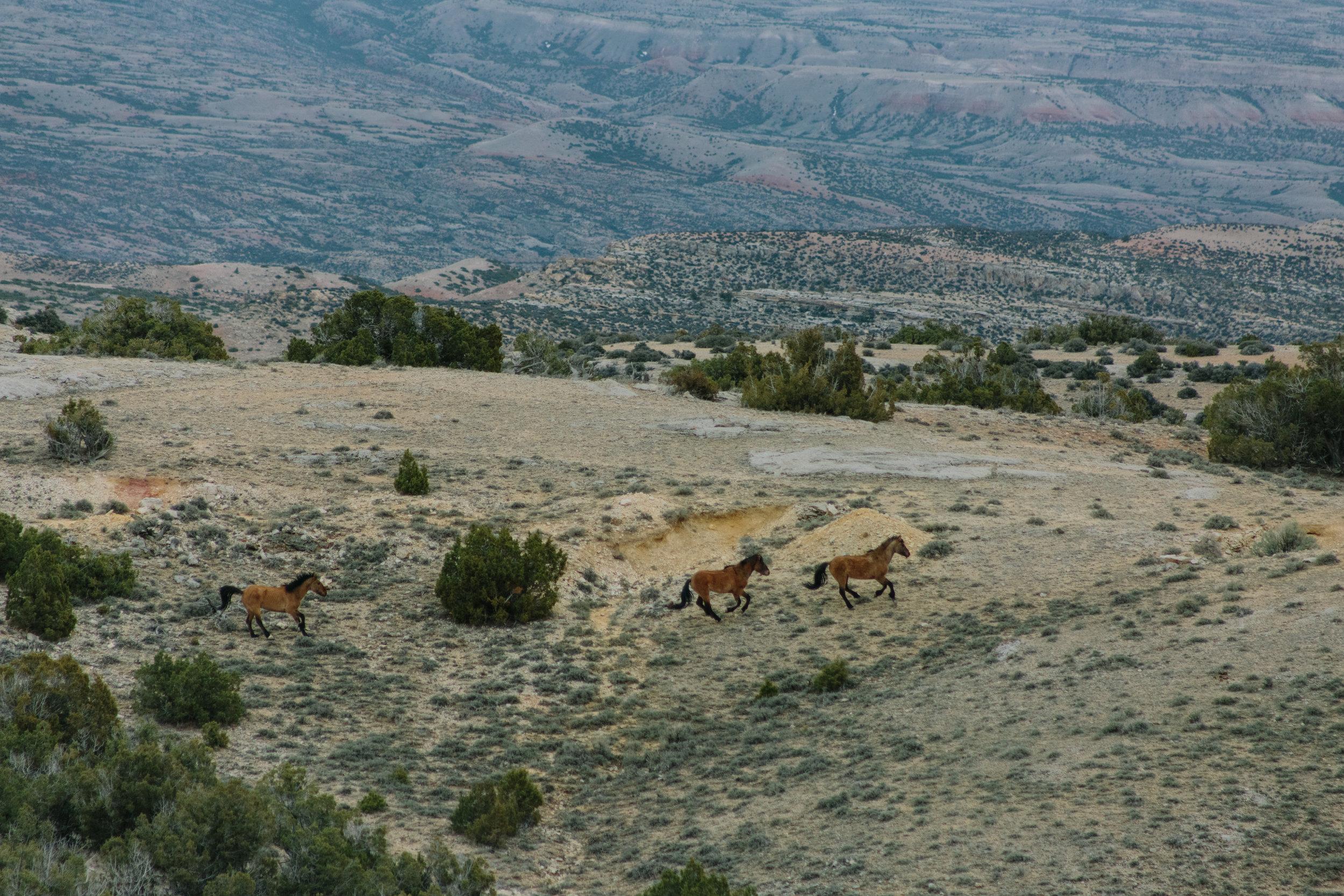 Montana_Wyoming_horses-28-BLOG-FB.jpg