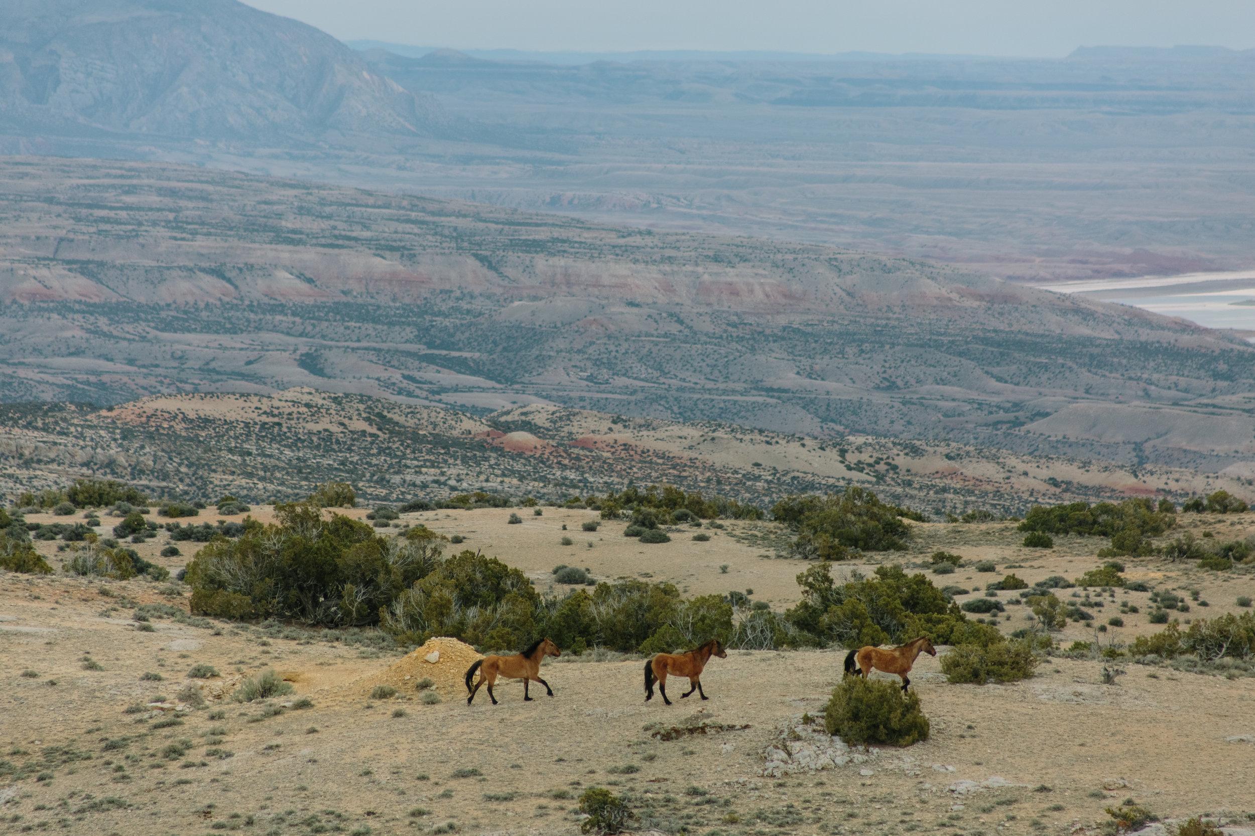 Montana_Wyoming_horses-30-BLOG-FB-INST.jpg