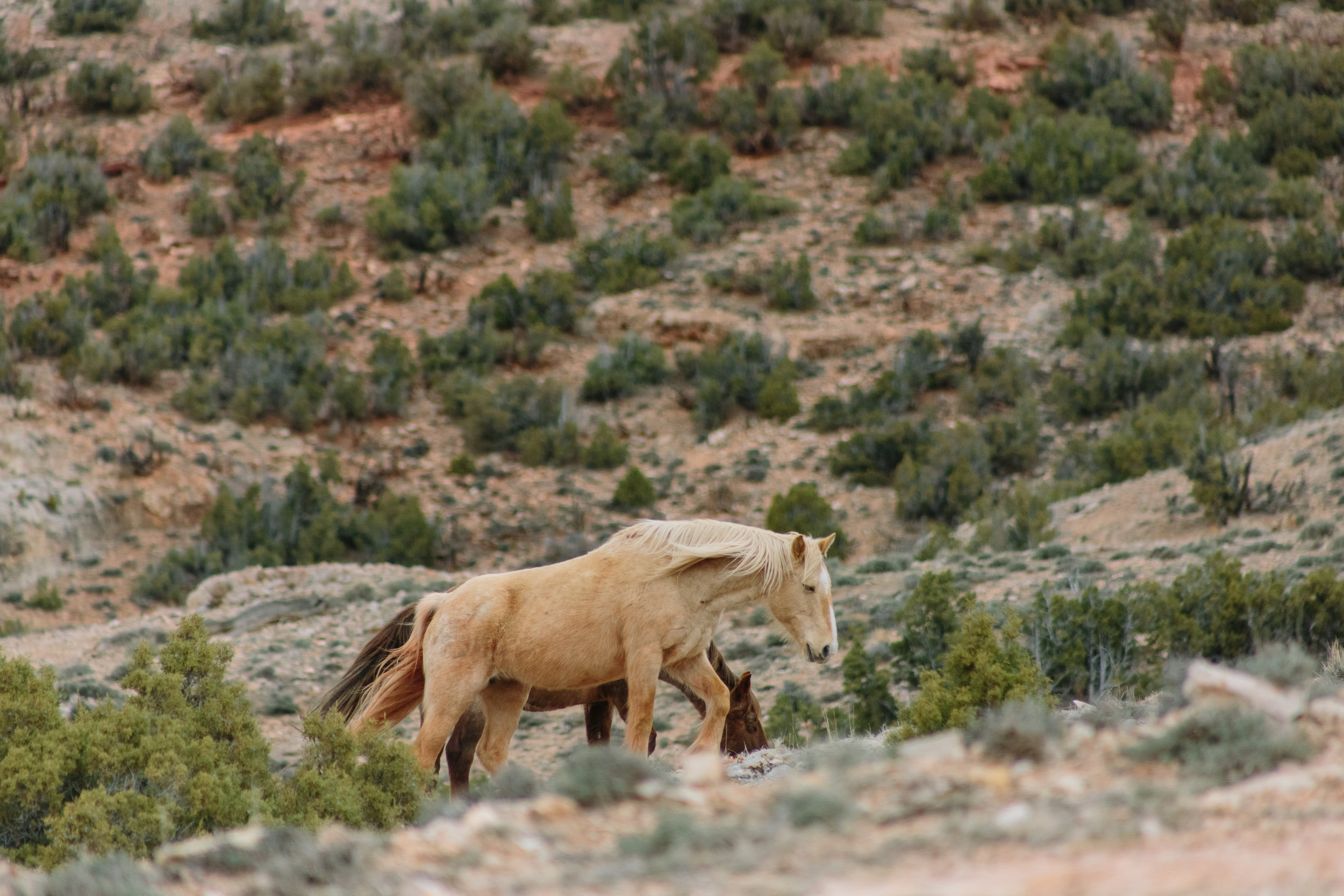 Montana_Wyoming_horses-40-BLOG-FB.jpg