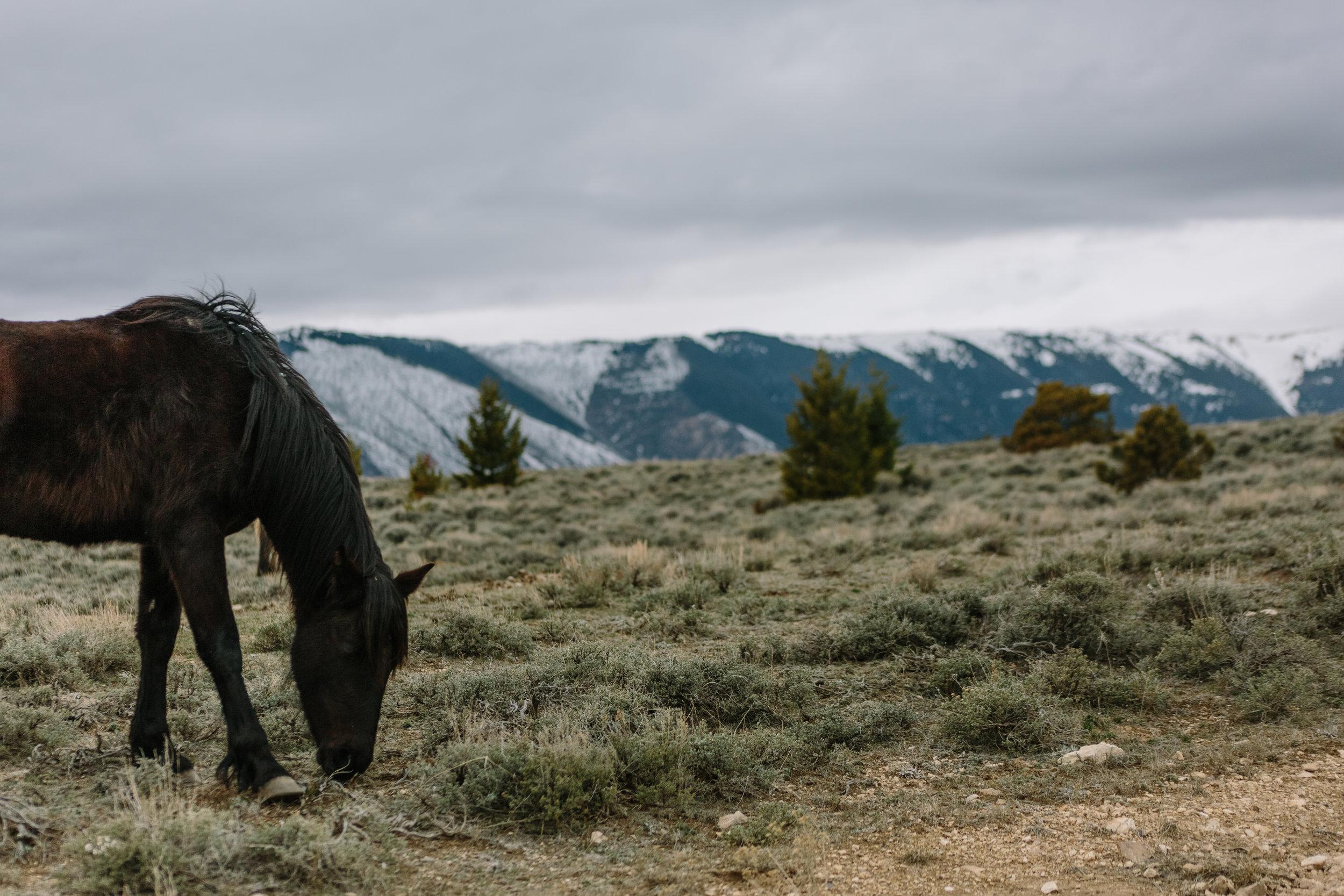 Montana_Wyoming_horses-51-BLOG-FB-INST.jpg