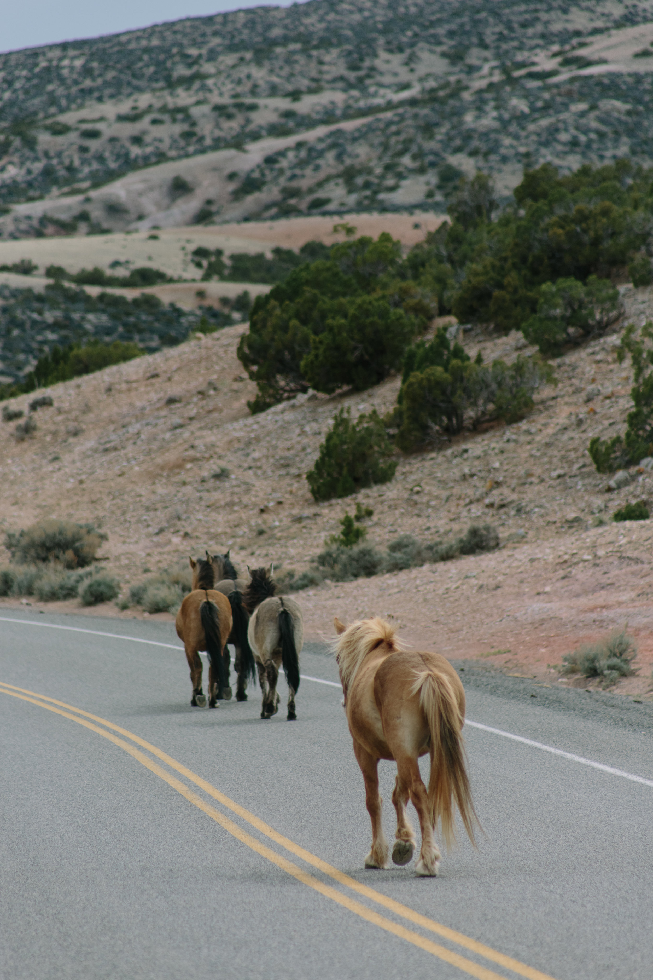 Montana_Wyoming_horses-94-BLOG-FB-INST.jpg