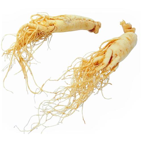 Ashwaganda.root.png