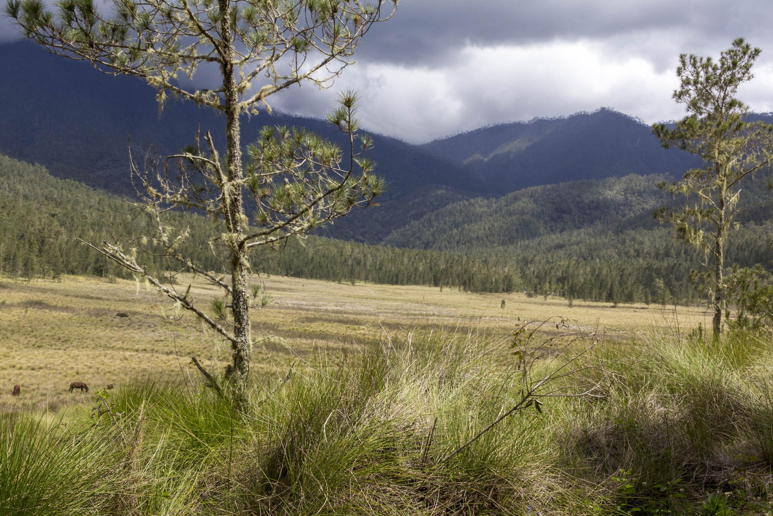 """Das Tal """"Valle de Bao"""", wenige Meter vor der Ankunft am Lager für die 2. Nacht."""