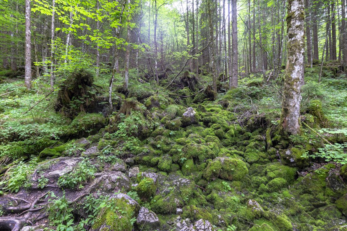 Der Zauberwald entstand durch einen gewaltigen Felssturz vor einigen tausend Jahren.
