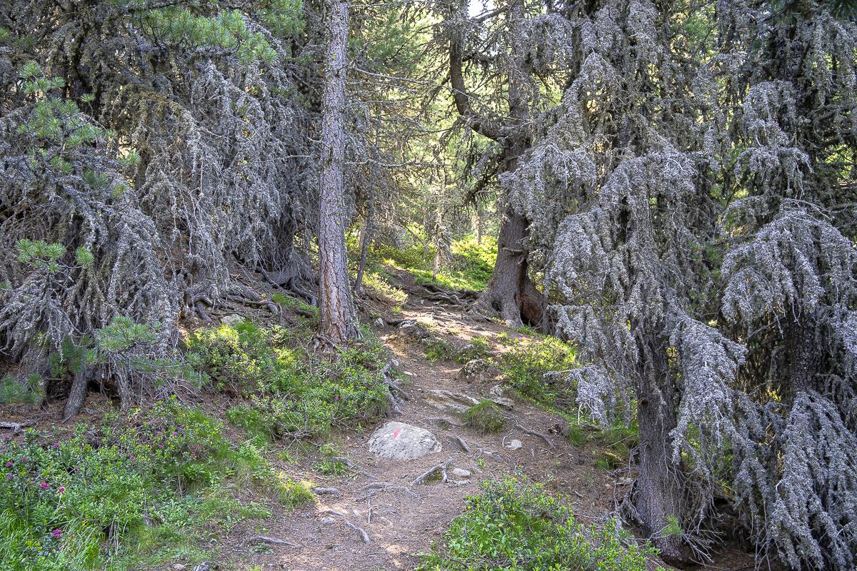 Der erste Teil des Weges verläuft schattig durch den Wald.