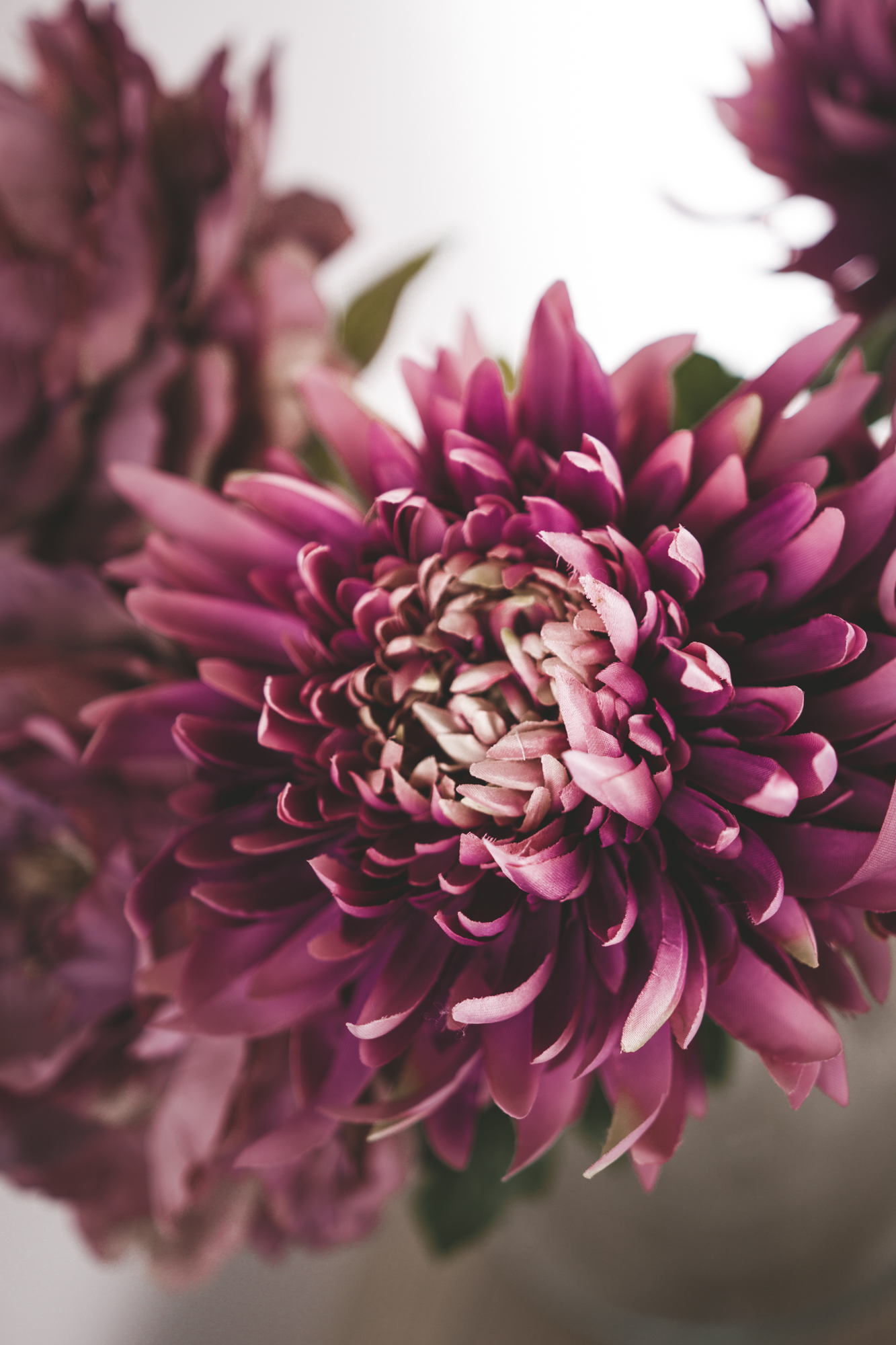 recipeflowers-26.jpg