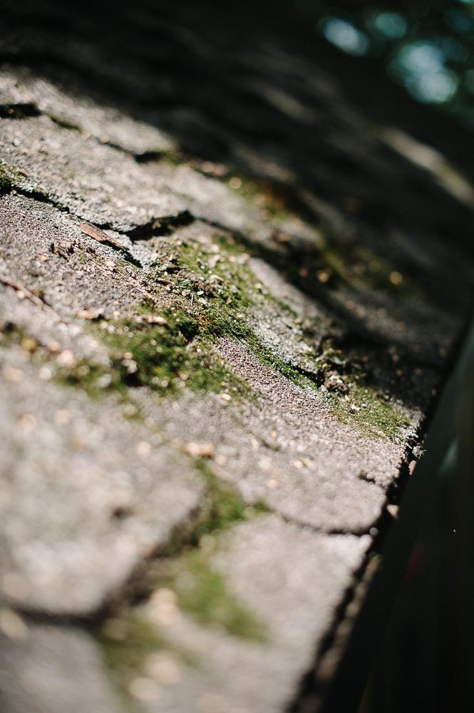 Northern MN cabin photography3.jpg