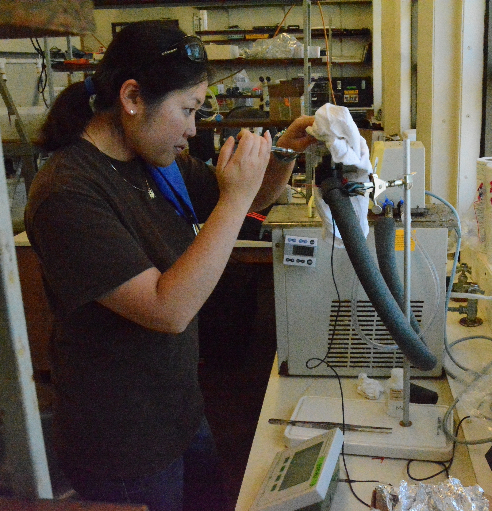 Caitlin Shishido Measures the rate of oxygen consumption BY a pycnogonid