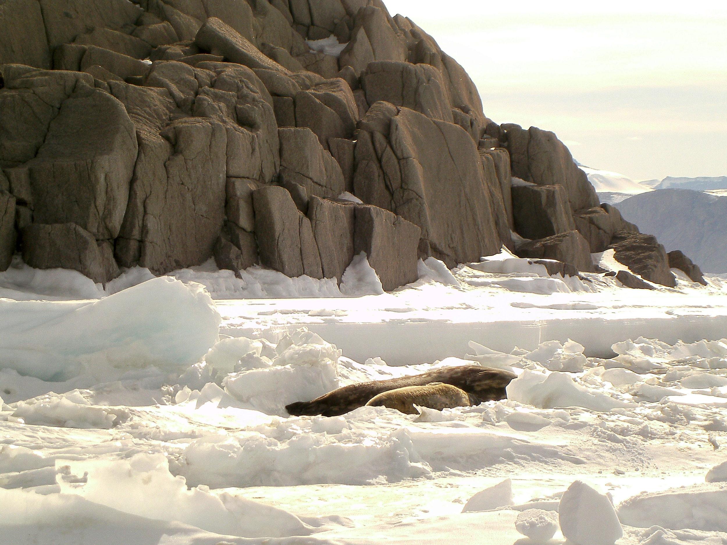 Granite_Harbor_Seals_Rocks.JPG
