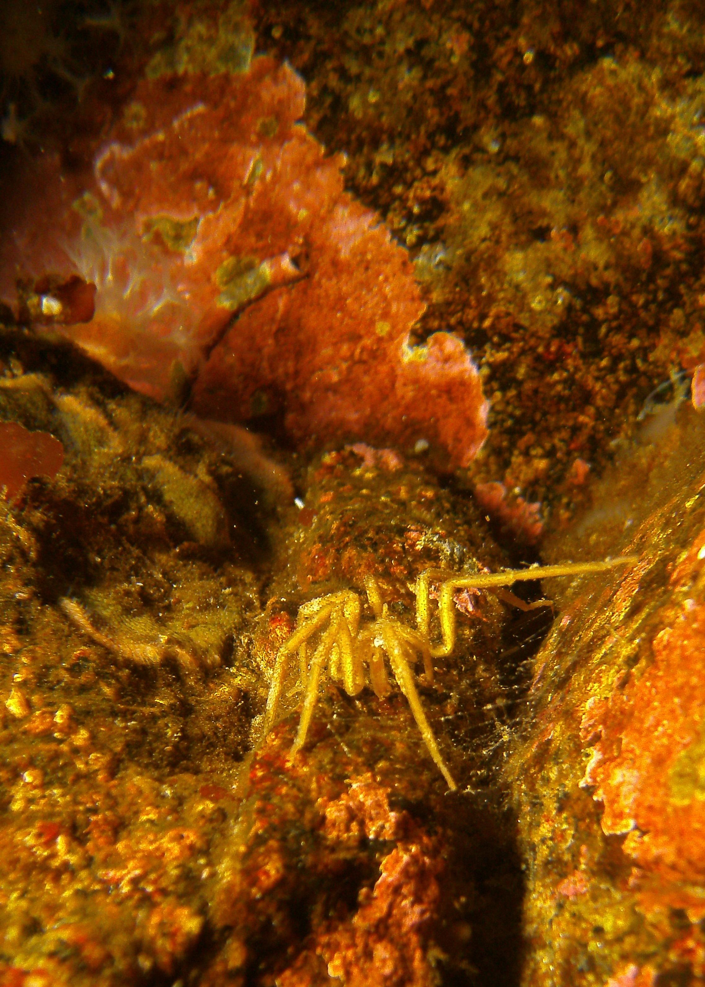 Sea_Spider_c_Granite_Harbor.JPG