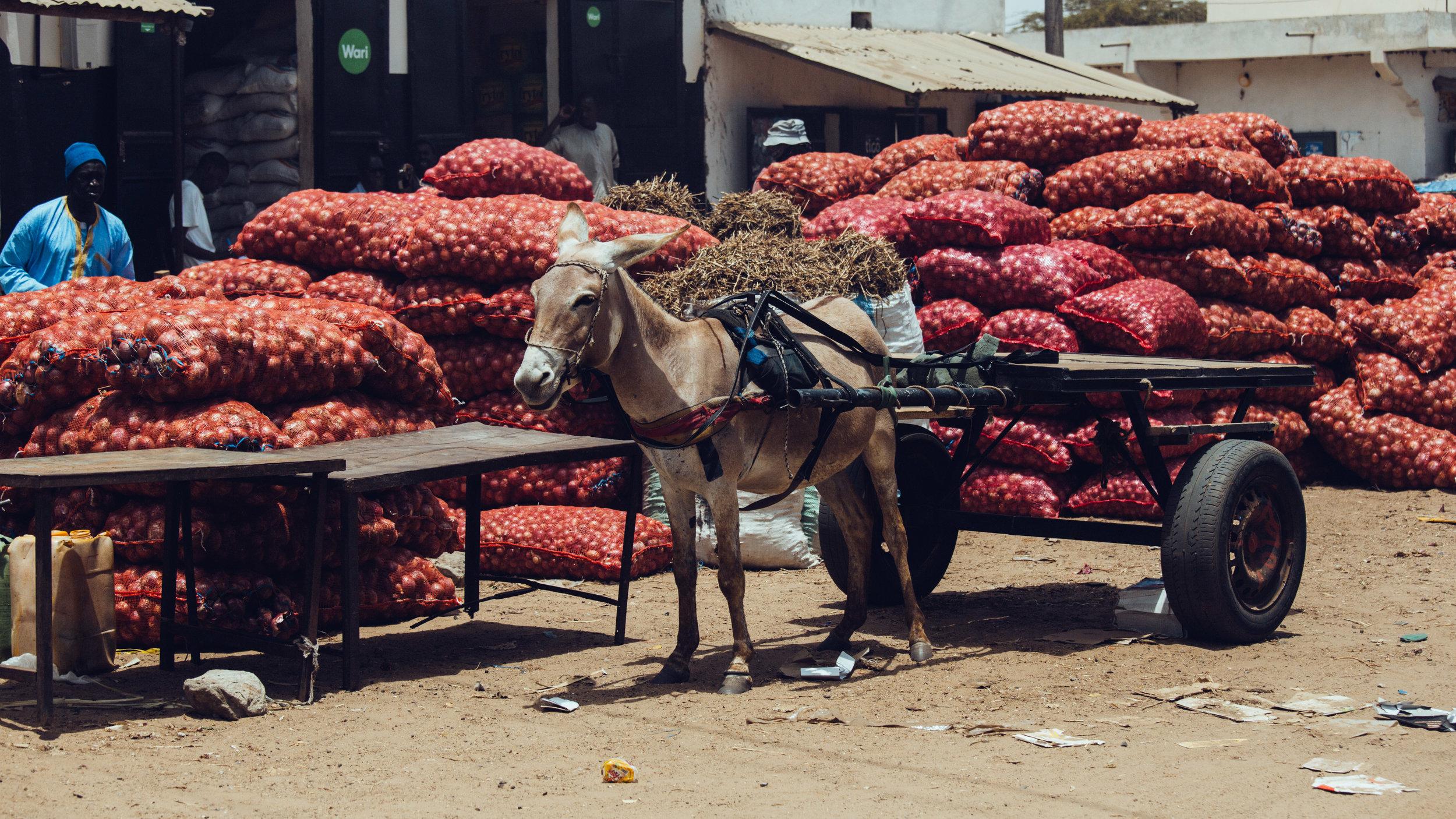 Senegal-16-9-17.jpg