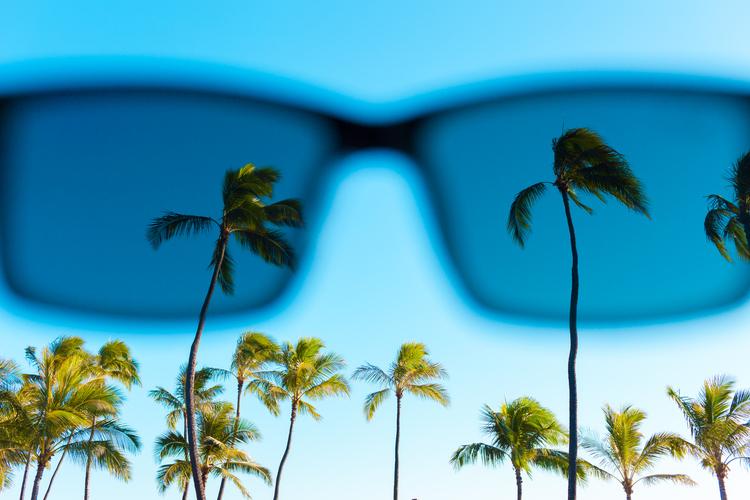 SunglassesPalms.jpeg
