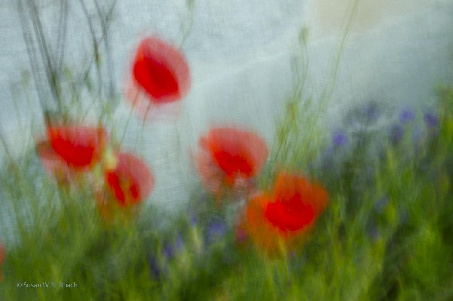 Monet's Poppies