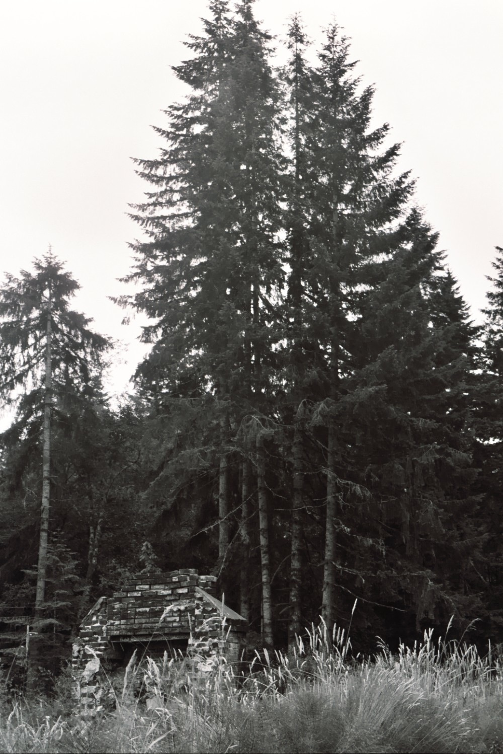 Through the pines