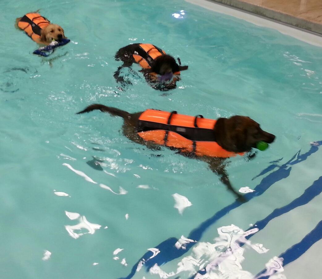 dawg paradise pool 2.jpg