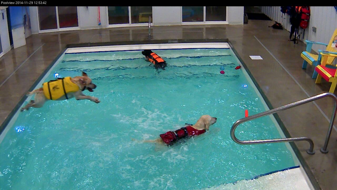 Pool Action.jpg