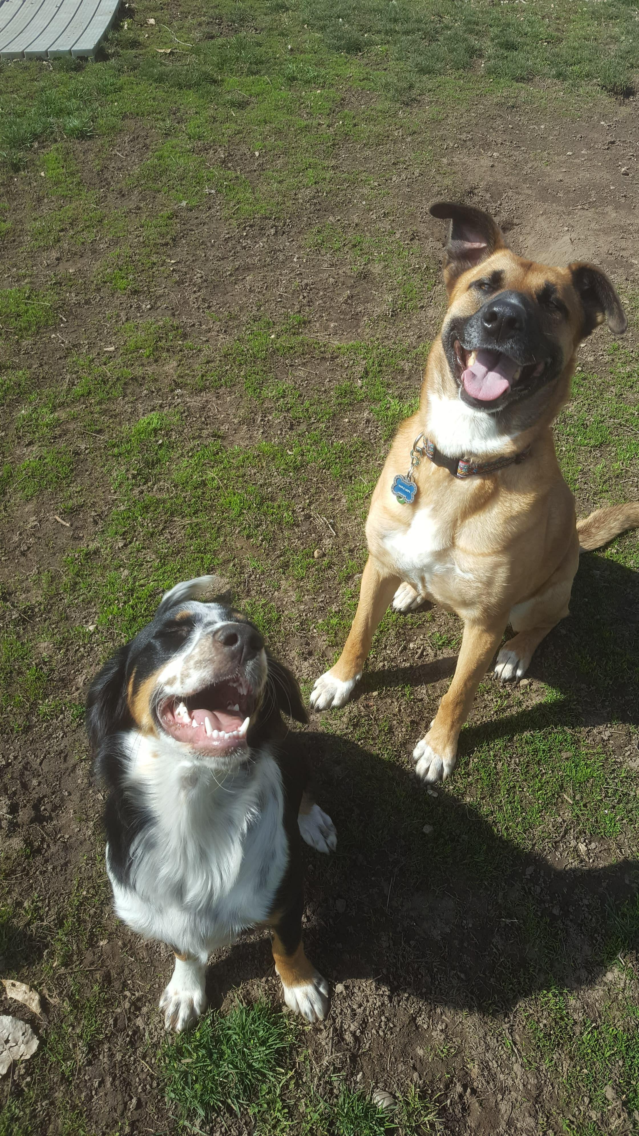 Layla & Maple