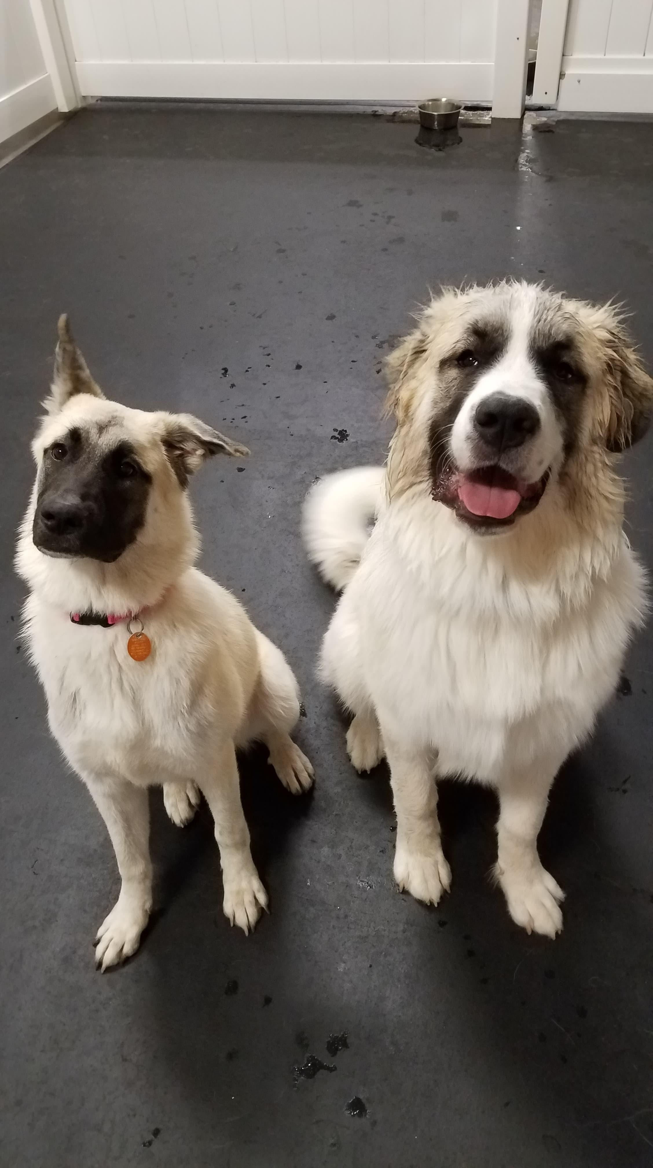 Tiki & Roscoe
