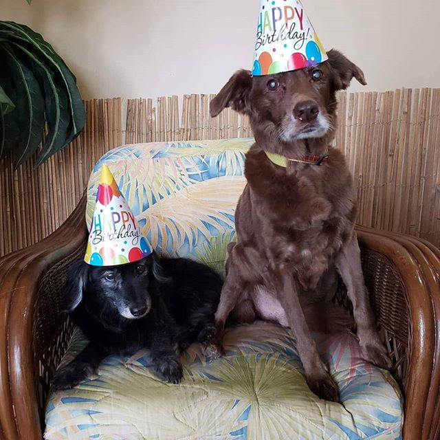 Timmy and Shadow litter mates spending their golden birthday with us....18 yrs old on the 18th!!