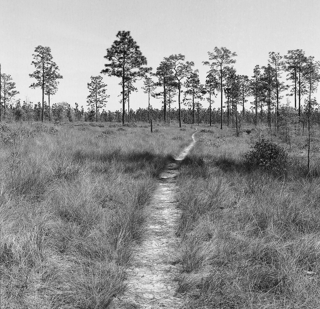 florida trail with trail in middle rollei.jpg