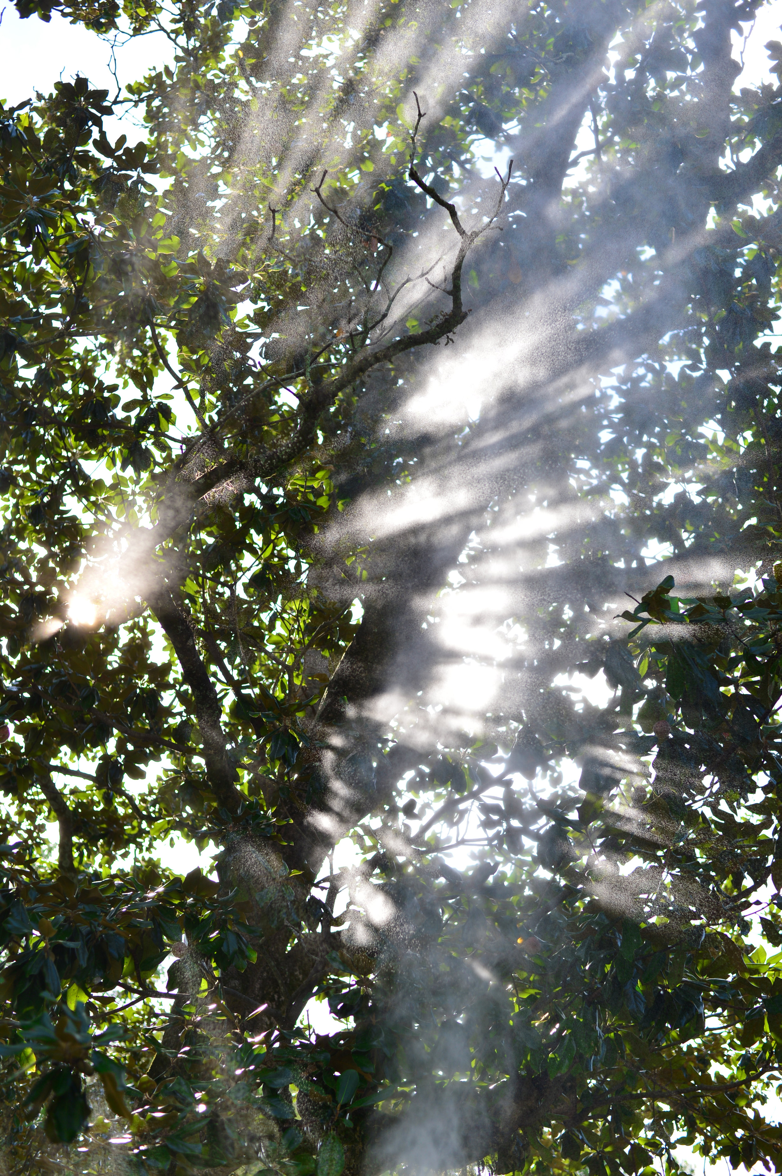water and light through trees 2017.jpg