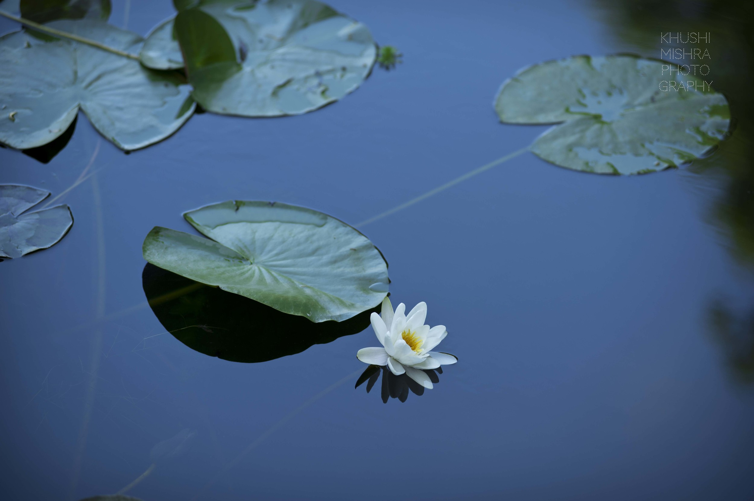 Water lilies Monet Giverny fine art photography