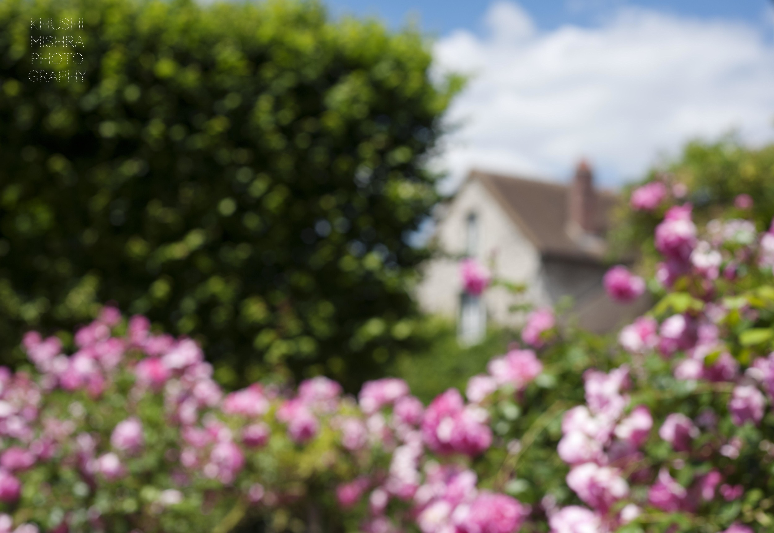 pink roses english style house giverny monet