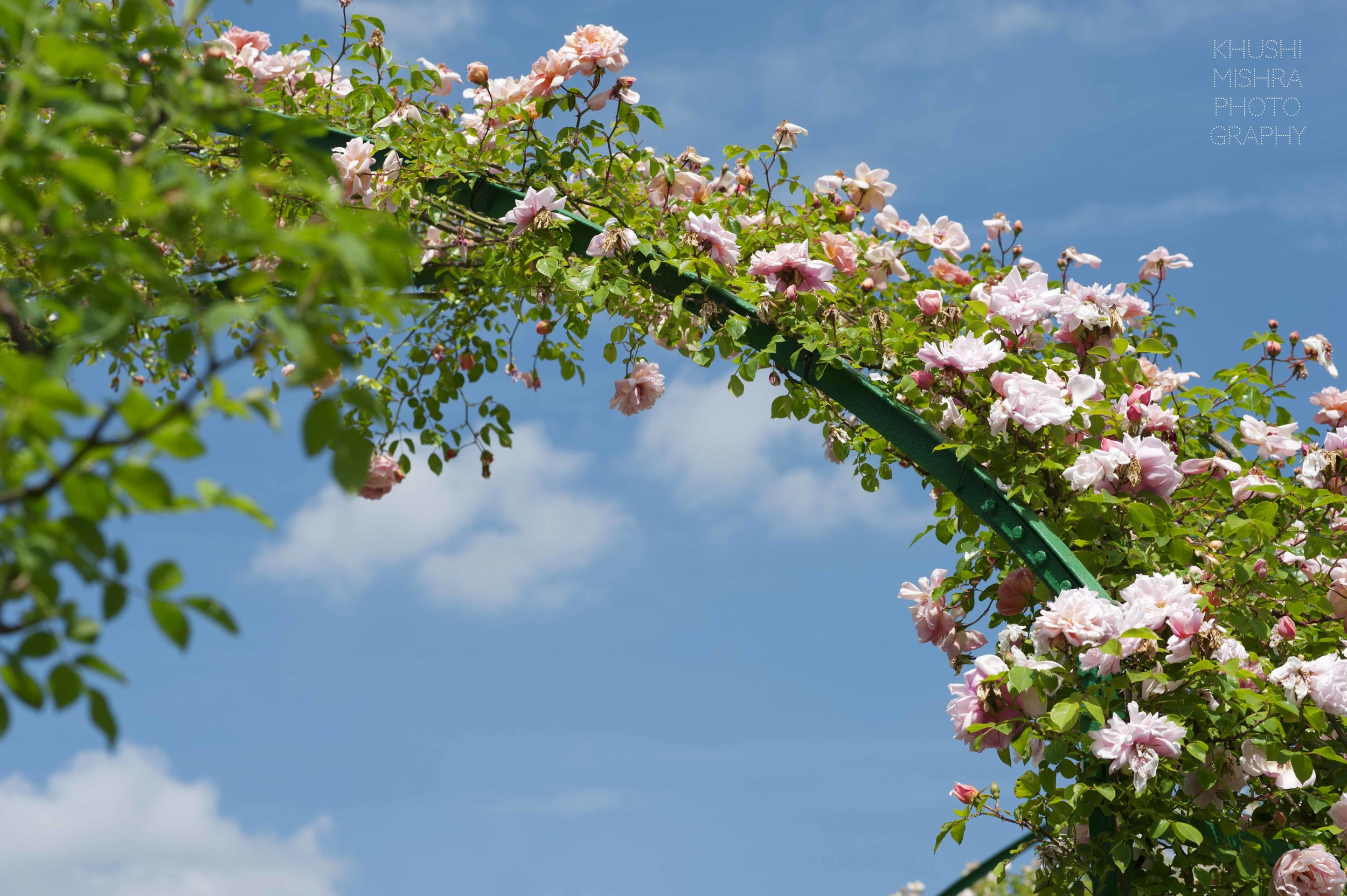 flower arch blue sky giverny monet.jpg