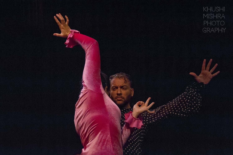 Flamenco_dsc_7909 copy.jpg